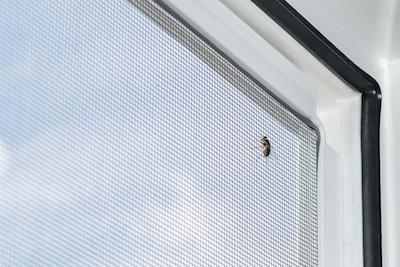 Les moustiquaires anti-mouche